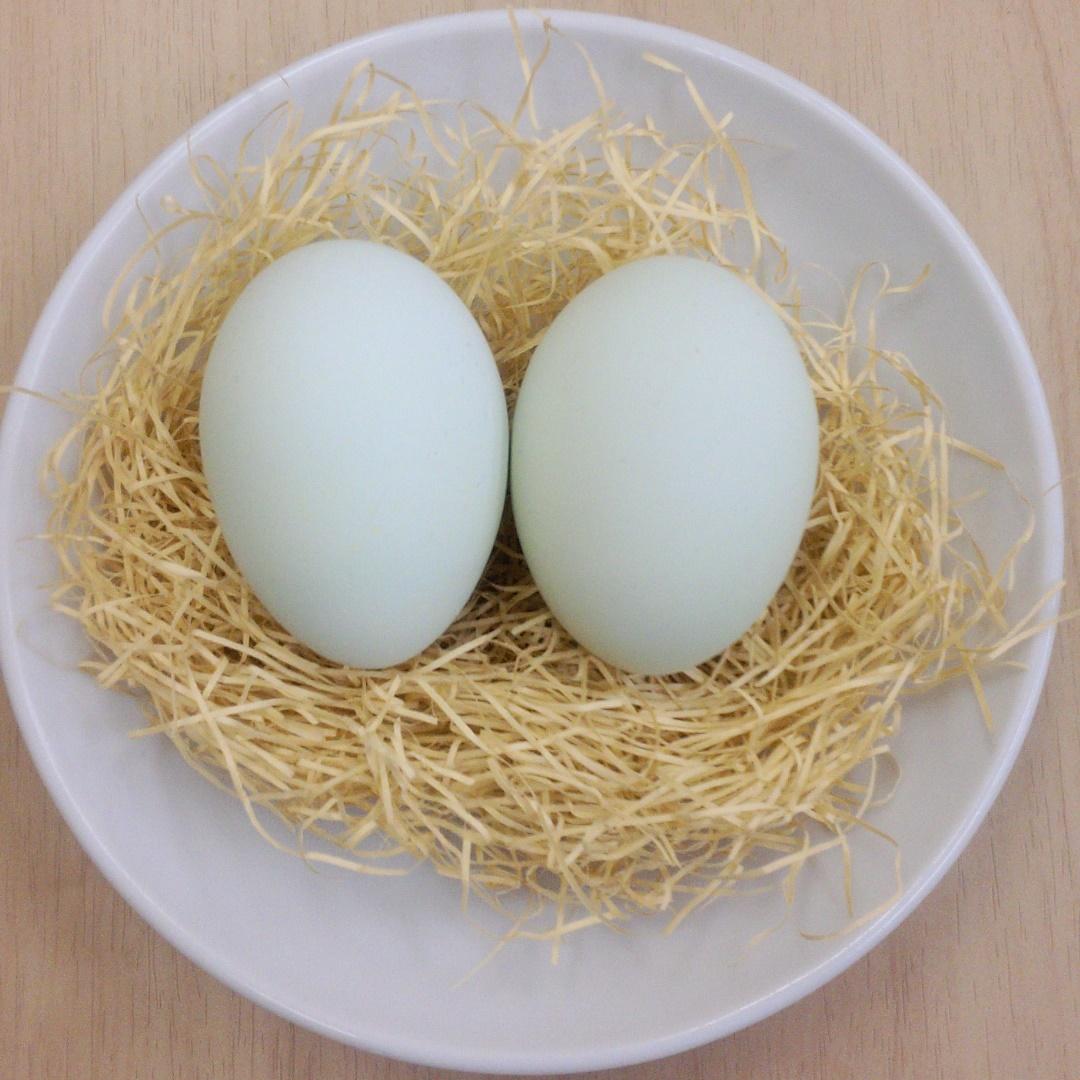 読み方 鶏卵